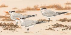 'Beach Terns'  12 x 24  Original Acrylic Painting on Canvas