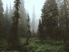 """Rainier Forest"" Art Print by Kevin Russ on Society6."