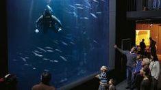 Müritzeum Aquarium Aquarium, Concert, Interactive Exhibition, Boating Holidays, Hostel, International Waters, Holiday Travel, Tourism, Recital