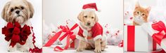 #xmas #christmas #bozenarodzenie #tapetynapulpit #wallpapers #animals #zwierzeta