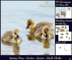 Eostra Easter Duck Chicks Insert Tag on Craftsuprint - Add To Basket!