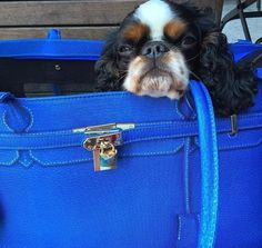 I feel so relaxed in my #APetwithPaws #PetCarrier!