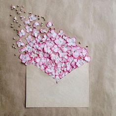 FLOWER FUN - Delightful and whimsical -- this floral photography by Anna Remarchuk, bloomin& envelopes, cute! Envelope Series I Deco Floral, Arte Floral, Floral Design, Design Art, Flower Wallpaper, Wallpaper Backgrounds, My Flower, Flower Art, Rose Flowers