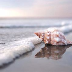 Seashell Photograph, Serene Beach Decor, Ocean Photography, Sea Waves, Beach…
