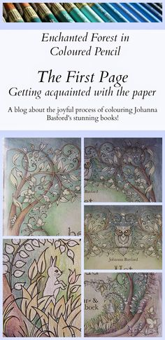 Passion For Pencils Welcome To Enchanted Forest Part Just Bought My Johanna Basford Book Today It Is So Beautiful I Dont Want Ruin By Coloring In