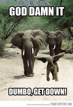 Honey, Dumbo is flying again…