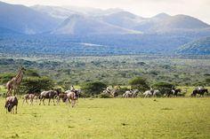 Horses at ol Donyo