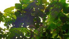 Mikumi National Park & Udzungwa Rain Forest Safari. http://bit.ly/tanzanasafaritours?utm_content=buffer4ffee&utm_medium=social&utm_source=pinterest.com&utm_campaign=buffer