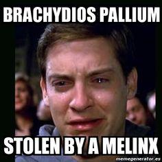 Meme crying peter parker - brachydios pallium stolen by a melinx .... FFFFFFFFF!