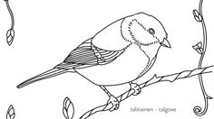 Talitiainen värityskuvassa. Bird On Branch, Types Of Art, Coloring Pages For Kids, Disney Characters, Fictional Characters, Birds, Quilts, Embroidery, Disney Princess