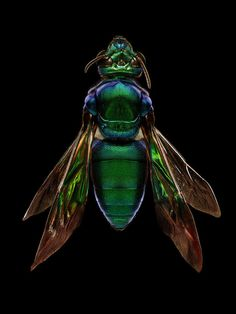 These Awe-Inspiring Photos Show Just How Beautiful Insects Can Be.  Photo credit Levon Biss.