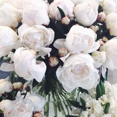 Bright white blooms