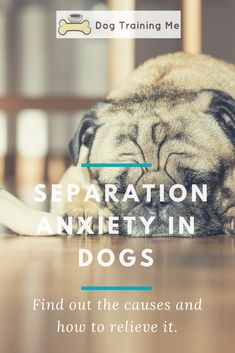 Separation anxiety in dogs isn't fun for you or your pup! Learn 5 ways to ease dog separation anxiety and the #1 root cause of your problem by reading our article! Help your dog out by making them more comfortable when you are away from them. #separationanxietyindogs #relievedogseparationanxiety #dogcare #doghealth
