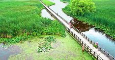 This Floating Boardwalk In Ontario Is The Most Beautiful Place For A Spring Hike colorado hiking trails, boots hiking, snacks for hiking Ontario Travel, Ontario Camping, Canadian Travel, Hiking Trails, Amazing Nature, View Photos, Day Trips, The Great Outdoors, Travel Inspiration