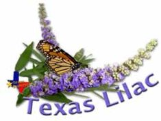 PLANTanswers: Plant Answers > Texas Lilac Vitex * The Next Mega-Superstar Plant for Texas