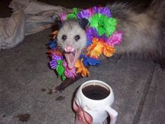 Both cute and a little creepy? Opossum, Fresh Memes, Mood Pics, Reaction Pictures, Mammals, Just In Case, Friends, Cute Animals, Creatures