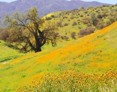 Santa Margarita wildflowers by www.centralcoastpictures.com