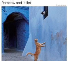 Romeo and Juliet kitties! Funny Cat Memes, Funny Cats, Meme Meme, Diy Funny, Crazy Cat Lady, Crazy Cats, I Love Cats, Cool Cats, Romeo Und Julia
