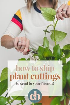 Learn the best way to ship plant cuttings in the mail, so you can send them to your friends! Clever Bloom