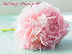 Peonies Stock Photos and Pictures Birthday Greetings, Birthday Wishes, Happy Birthday, Name Day, Peonies, Stock Photos, Flowers, Christmas, Pictures