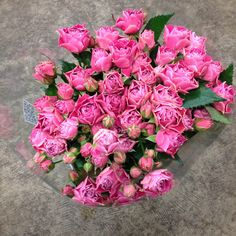 Bright Pink Spray Rose called Splendid Sensations. Sold in bunches of 10 stems from The Flowermonger, the wholesale floral home delivery service.
