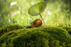 Great #photography © António Bernardino Coelho from @photocrowd