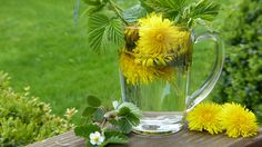 Make your own dandelion root tea & reap the benefits of detox & weight loss along with added vitamins & nutrients. Enjoy dandelion coffee home brew recipe Dandelion Weed, Dandelion Benefits, Dandelion Root Tea, Dandelion Leaves, Dandelions, Dandelion Recipes, Homemade Wine Recipes, Tea Recipes, Chakras Reiki