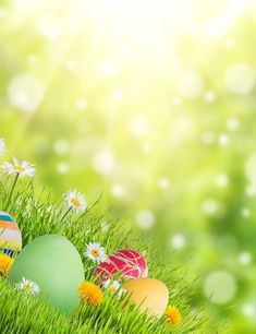 Easter Eggs In Sunshine Bokeh Photography Backdrops spring Logo Doce, Ostern Wallpaper, Easter Backgrounds, Apple Watch Wallpaper, Spring Images, Easter Pictures, Easter Flowers, Flower Backdrop, Easter Celebration