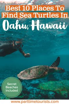 Find out where the top 10 places are to see and swim with sea turtles in Oahu Hawaii are! Well-known and secret beaches included. Sea Turtles Hatching, Baby Sea Turtles, Beautiful Places To Visit, Places To See, Island Park Idaho, Makua Beach, Hawaii Travel, Oahu Hawaii, Electric Beach