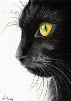 Black Cat Portrait Charcoal drawing by lorene