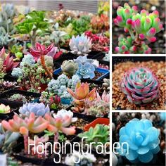 Cheap planting seeds outdoors, Buy Quality seeds lotus directly from China seed plant Suppliers: free ship 40 Mix Succulent seeds lotus Lithops Pseudotruncatella Bonsai plants Seeds for home & garden Flower pots planters Colorful Succulents, Rare Succulents, Planting Succulents, Propagate Succulents, Indoor Succulents, Indoor Cactus, Growing Succulents, Colorful Garden, Potted Plants