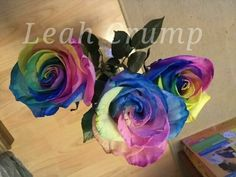 Real Rainbow Colored Roses (Color Not Photo Chopped!)