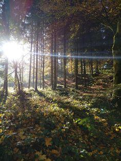 Autumn in Germany [OC] [34804640] #reddit