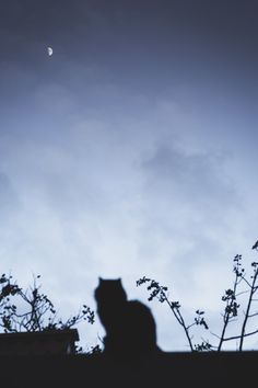 Morning Cat, Kittens Cutest, Spectrum, Aesthetics, Girly, Moon, Dark, Photography, Blue