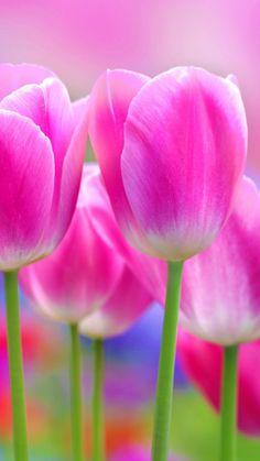 Flower iPhone 6 Plus Wallpaper 428.jpg (1080×1920)