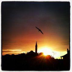 #sunset#seagull#Rovigno#Istria#terramagica#nostalgia#mare#agosto#igersitalia#rovinj#SantEufemia#Latergram