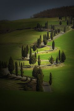 Cypress-Lined Montichiello Road, south of Pienza, Val d'Orcia, Tuscany