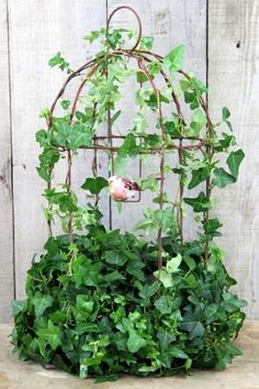 Place in areas with plenty of light but preferably away from direct hot sun. Check watering regularly to prevent drying out. Do not let roots sit in water. Keep exposed to bright light, full sun, reflective light. Ideal indoor temperature is degrees F. Garden Crafts, Garden Art, Ivy Plant Indoor, Birdcage Planter, Birdcage Decor, Bird Cage Covers, Deco Nature, Ivy Plants, Deco Floral