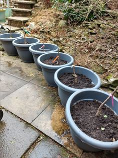 Planted up six patio trees, fingers crossed they grow well. 2x apple, nectarine, plum , pear and cherry. Patio Fruit Trees, Crossed Fingers, Allotment, Plum, Life Is Good, Cherry, Apple, Plants, Apple Fruit
