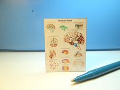 Miniature Brains many Views Sign : Dollhouse P872