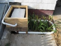 Greywater system for a tiny house (modify to water backyard herb garden in normal house?)