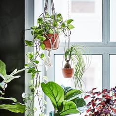 Growing urban jungles and great ideas - IKEA