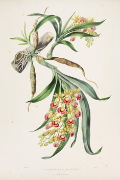 The Orchidaceae of Mexico and Guatemala. - 1837 - Biodiversity Heritage Library