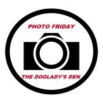 HOME - PHOTO FRIDAY | THE DOGLADY'S DEN