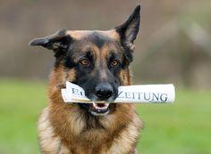 Ist ihr Hund schlau? Um das herauszufinden, gibt es sieben Übungen für Ihren Vierbeiner. Machen Sie den IQ-Test und finden es heraus.