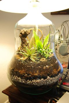 lamp terrarium - could this really last long-term?