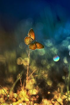"""""""If that moment had been a real thing, it would've been a butterfly, flapping and fluttering toward the sun."""" — Maggie Stiefvater (Shiver (The Wolves of Mercy Falls, #1))  Sun Bathing by nur santo on 500px"""