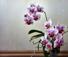 Flora, Succulents, Bridal, Plants, Gardening, Google, Orchids, Lawn And Garden, Succulent Plants