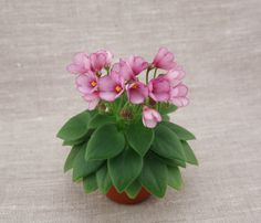Fun And Eco-Helpful Solutions To Remodel Your Yard Unknown Miniature Russian Hybrid. Perennial Flowering Plants, Herbaceous Perennials, Pink Drive, Saintpaulia, Unusual Flowers, Environmental Art, Flowers Nature, Shade Garden, Pansies