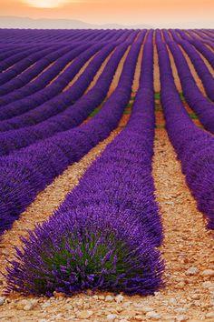 Einmal die Lavendelblüte in der Provence erleben :)